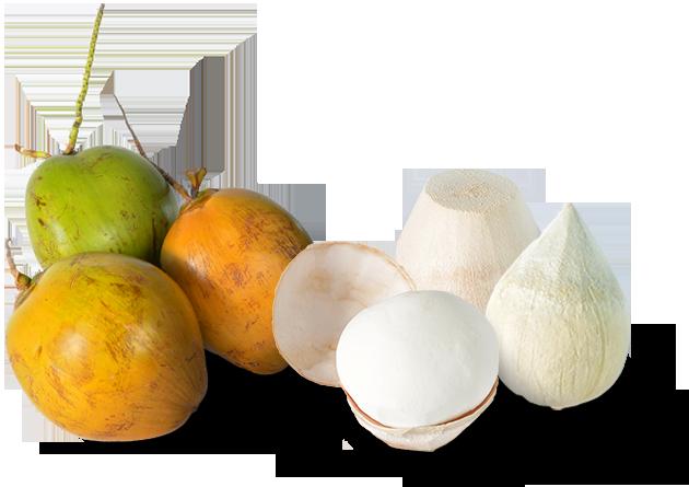 Fresh Coconut Supplier - T&L Coconut