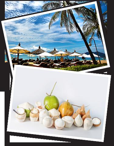 Fresh Coconut Supplier Kuala Lumpur