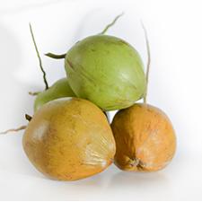 Matang Coconut Malaysia
