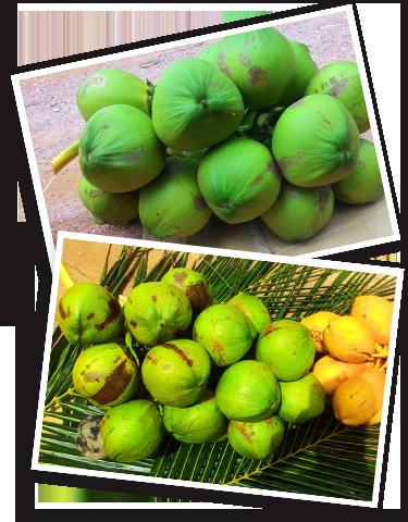 Pre-Cut Coconut - Fresh Coconut Wholesale Singapore